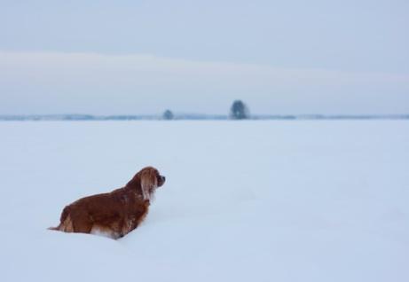 Talvisia kuvia..