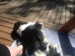 Bentley ottaa aurinkoa